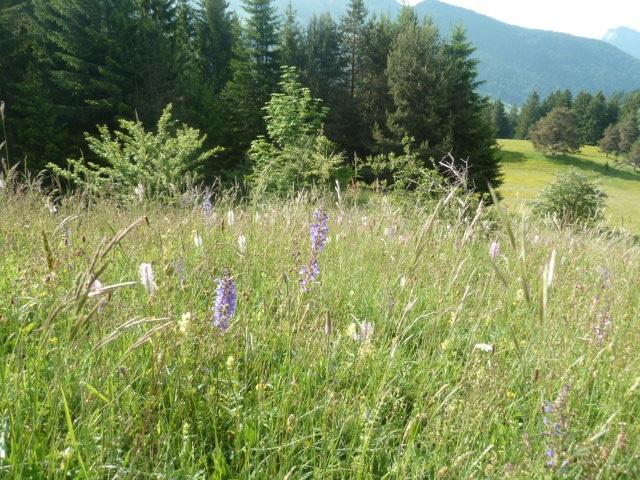 Plantes montagne - Nomad Bike